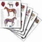 Anatomische posterset paard