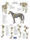 Poster paard botten